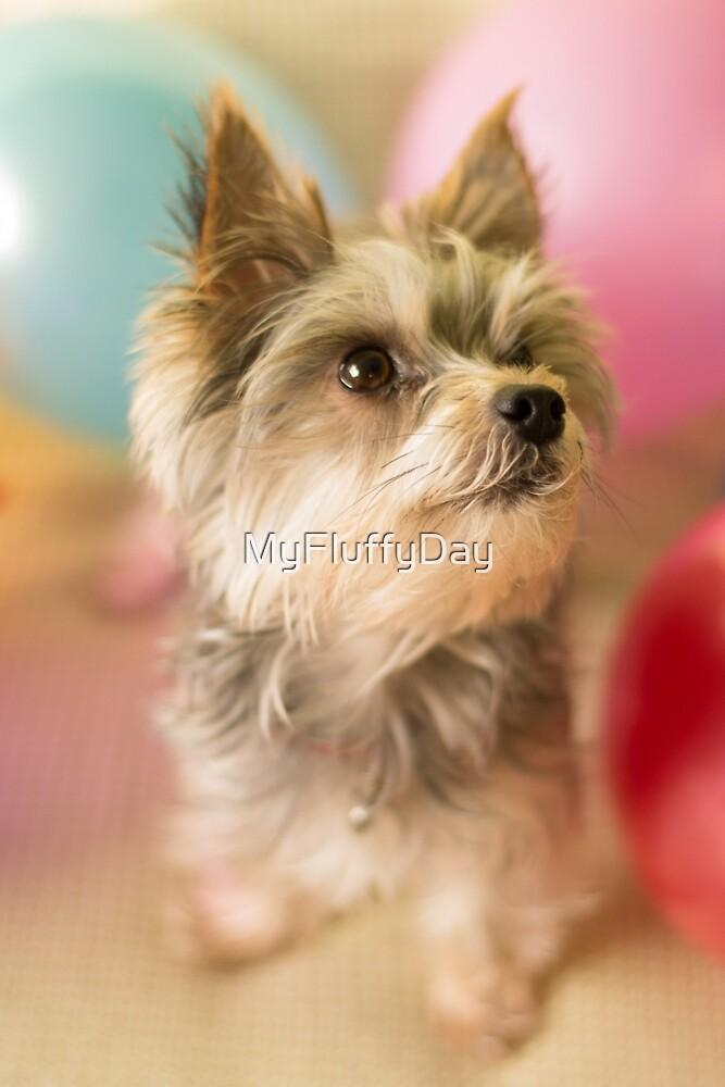 It's My Birthday! by MyFluffyDay