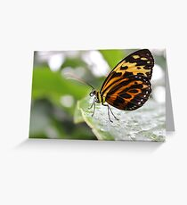 The Best Butterfly Greeting Card