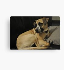 Coulson, my dog! Canvas Print