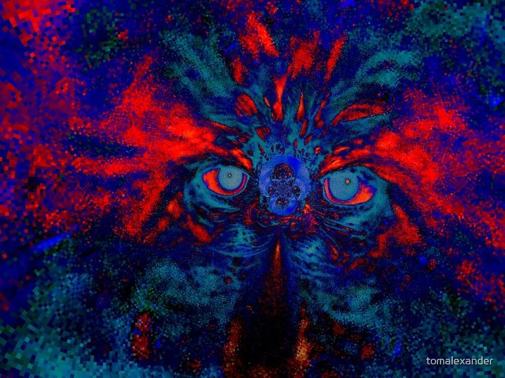 Eyes in the Dark by tomalexander