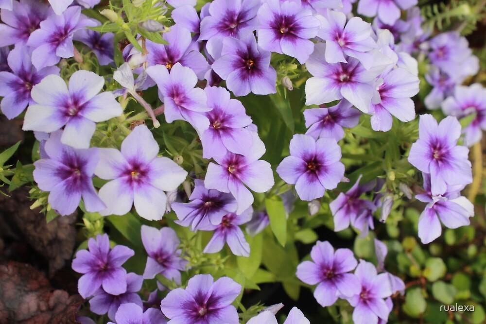 Pretty in Purple by rualexa