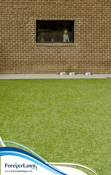 Artificial Grass for Pets by ForeverLawnGTA