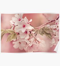 Apple Tree Blossoms Poster