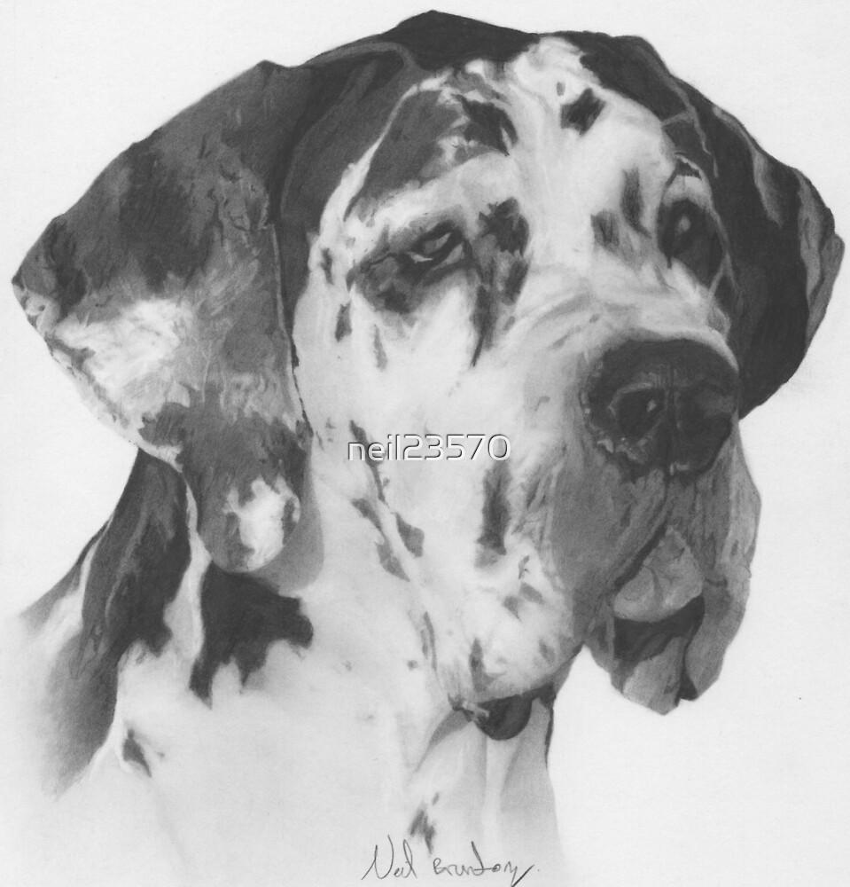 Great Dane by neil23570
