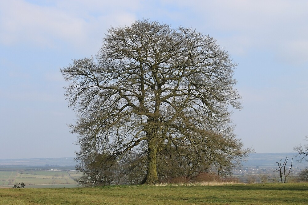 English Oak by Arne-Jan Paalzow