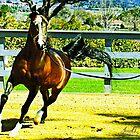 Arabian Stallion Simeon Shai by Janice O'Connor