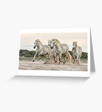 Camargue Mares Greeting Card