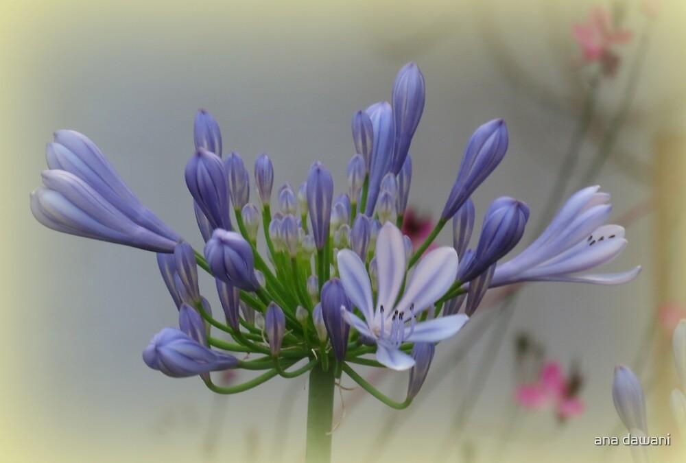 Soft Blue by anadawani