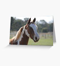 Moe- The Horse Greeting Card
