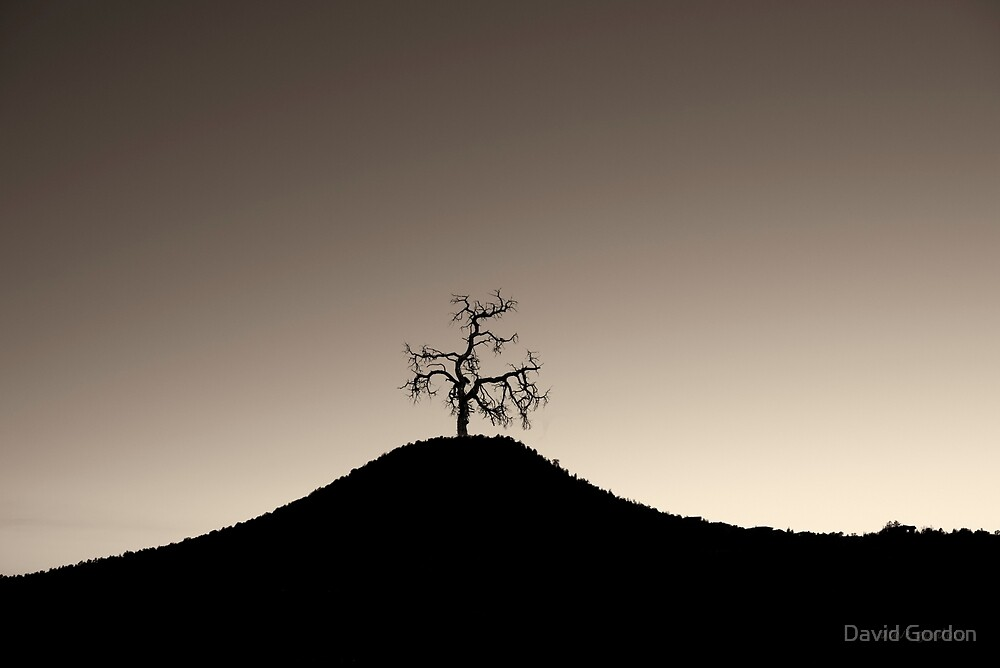 Tree and Hill  Montage Toned by David Gordon