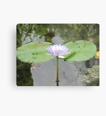 Lily pads and flower Metal Print