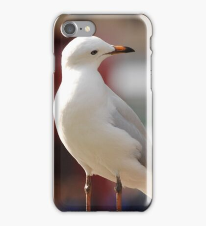 Seagull Looking down iPhone Case/Skin