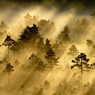 28.6.2014: Morning in Torronsuo National Park by Petri Volanen