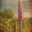 Photo art, Plant, Foxglove, Digitalis purpurea by Hugh McKean
