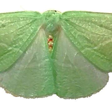 Chlorosea Banksaria (flawed wing) B by spookyluca