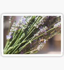Lavender Lover Sticker