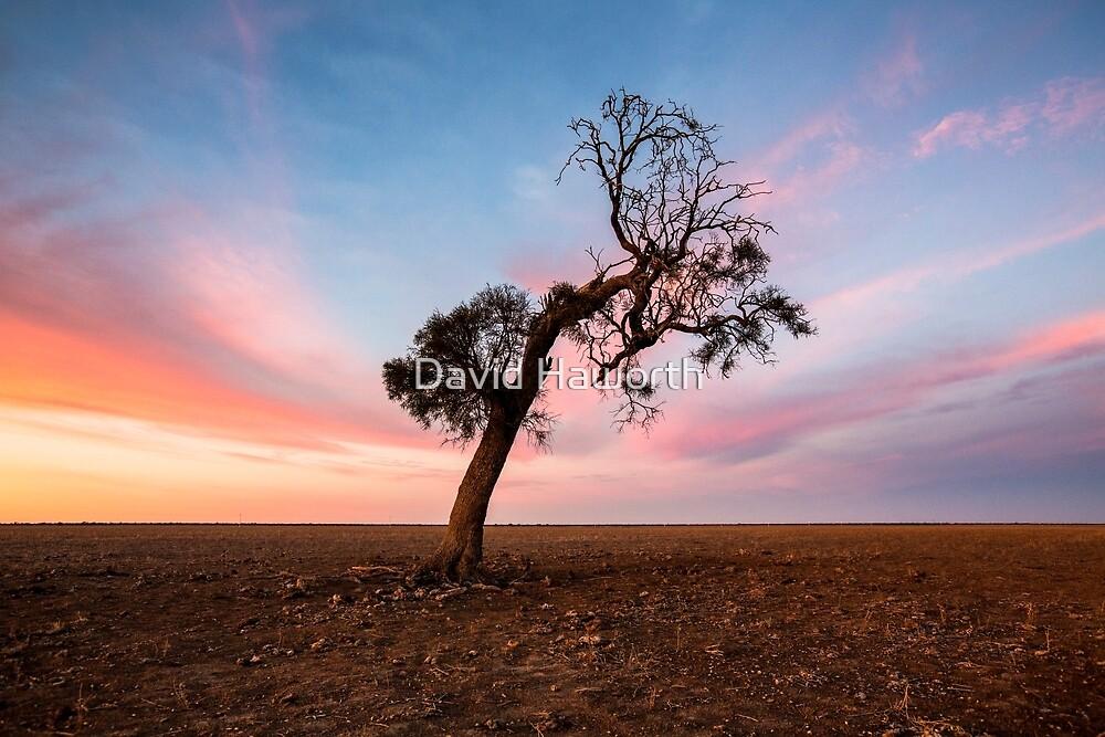 Lonely Tree by David Haworth