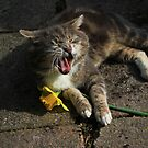 Laughing cat holding flower by turniptowers
