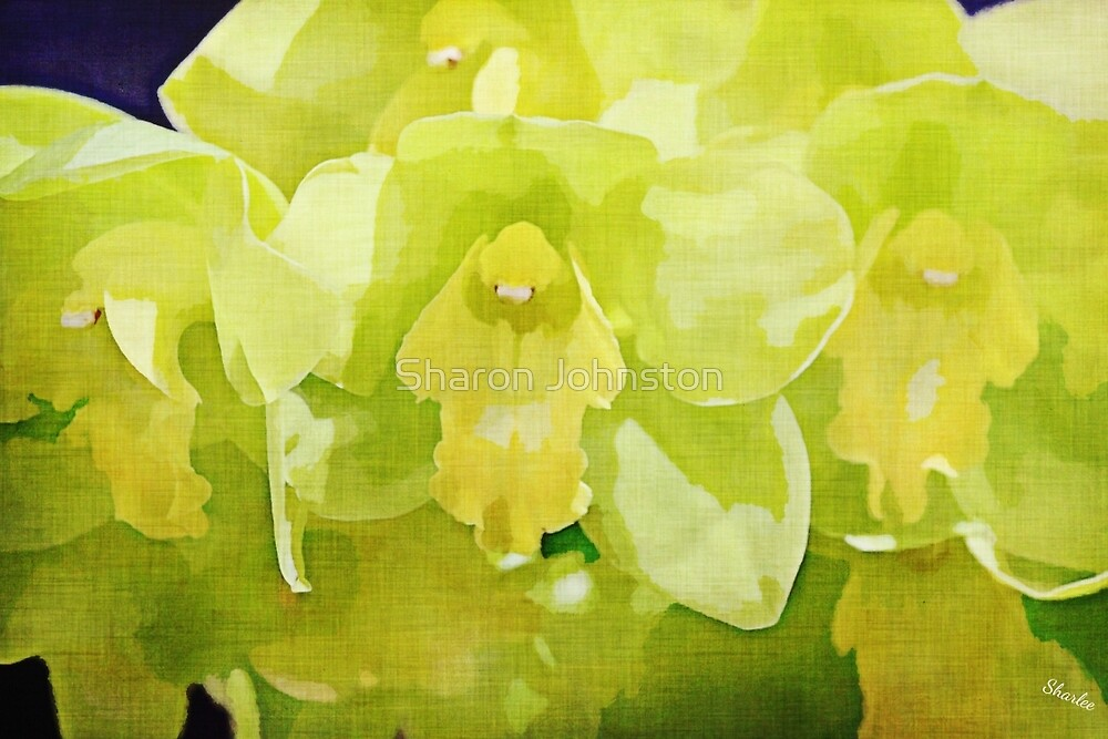 Green Orchid by Sharon Johnston