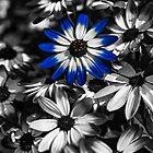Blue Senetti by Reg-K-Atkinson