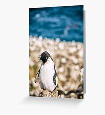 Sleepy Penguin - Falkland Islands Greeting Card