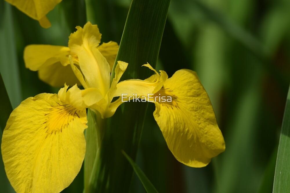 Yellow Iris by ErikaErisa
