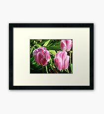 Water Drops on Flowers Framed Print