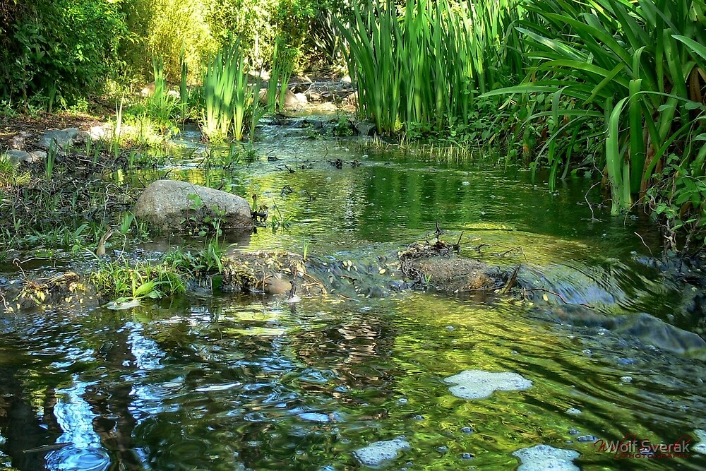 Creek through Canberra/ACT/Australia (3) by Wolf Sverak