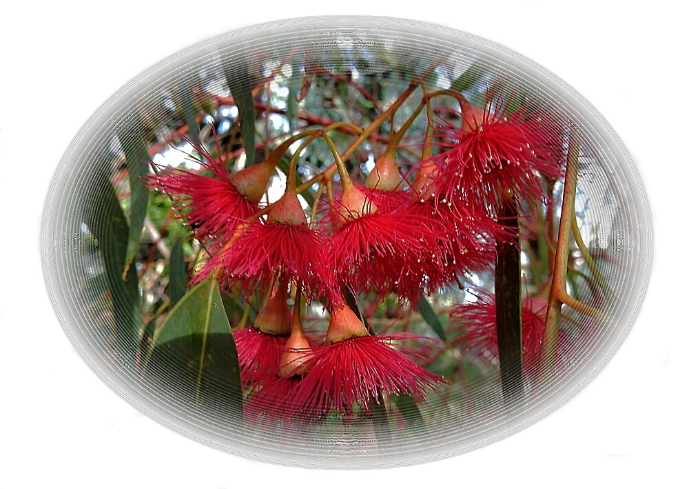 Red Gum Tree Flowers by HilaryFran