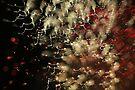 fireworks 1/7/16 by david gilliver