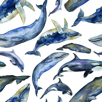 Watercolor whales by kate-vigdis