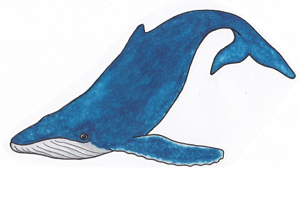Whale, blue whale illustration by KiboriArt