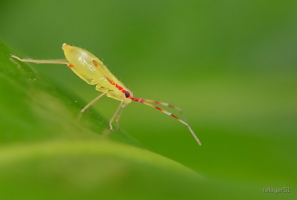 Tiny Yellow Bug by relayer51