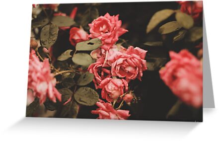 Vintage Roses by Suzanne Charette
