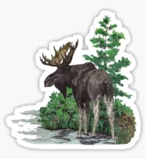 Moose watercolor  Sticker