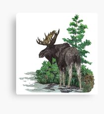 Moose watercolor  Canvas Print