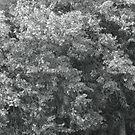 high wind in lime trees by Nikolay Semyonov