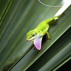 Green Anole by alexgigs