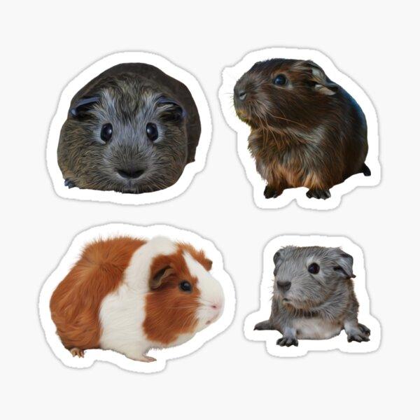Guinea Pigs Sticker Pack 1 Sticker