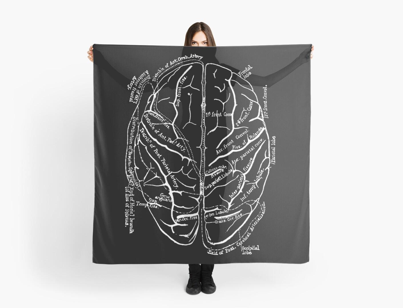 Vintage Anatomy : The Brain by lafayettecanada
