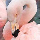Schön in pink von Kathy Baccari
