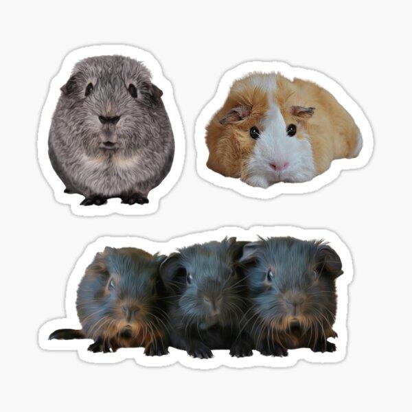 Guinea Pigs Sticker Pack 2 Sticker
