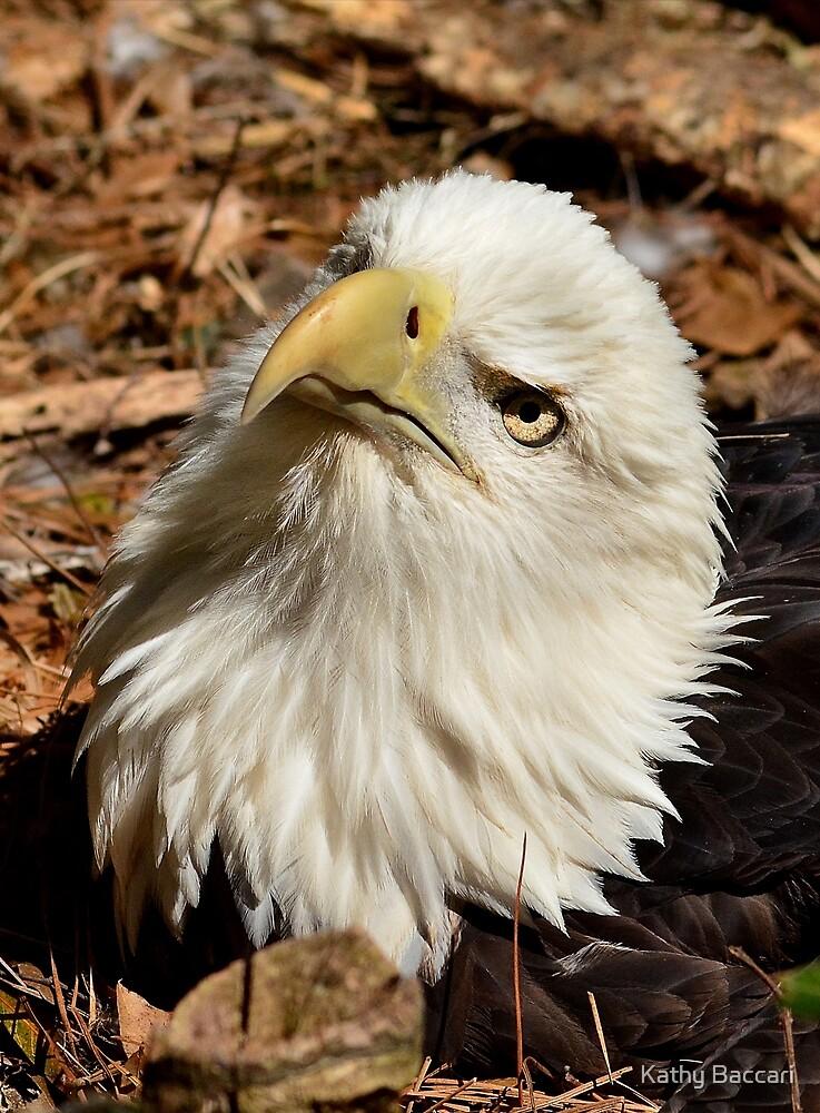 Nesting Eagle by Kathy Baccari