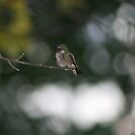 little hummingbird by little1sandra