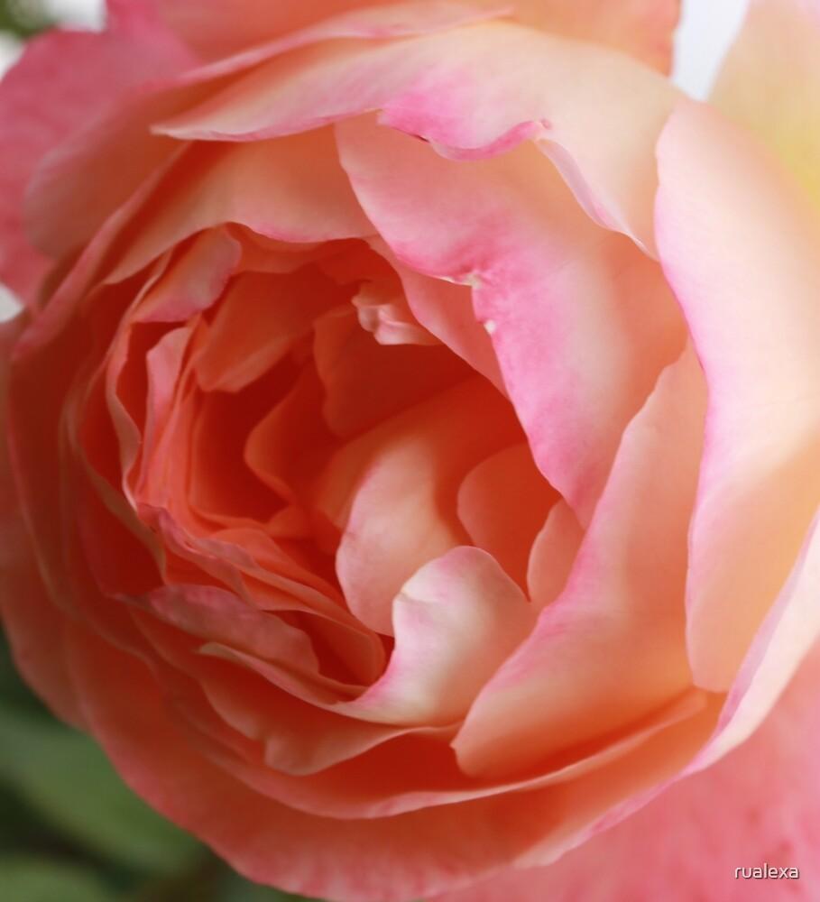 Pink and Cream by rualexa