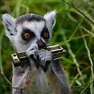 Madagascan homesick blues by Matt West