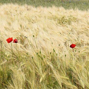 field by katjahahaha