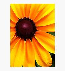 Yellow and Purple Photographic Print