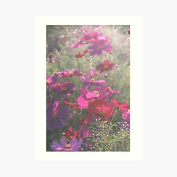 Cosmos - コスモス Art Print
