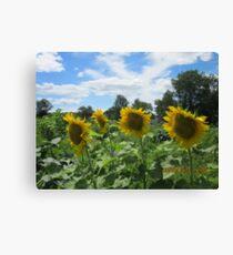 sunny garden day Canvas Print